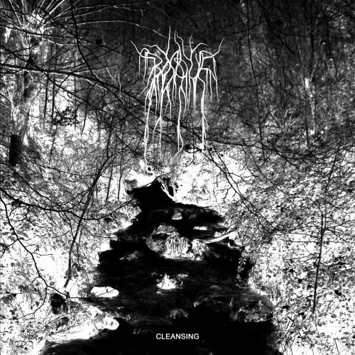 Cleansing-bosque-lp
