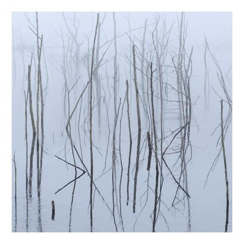 Frozen Bloom-olhava-cd dig